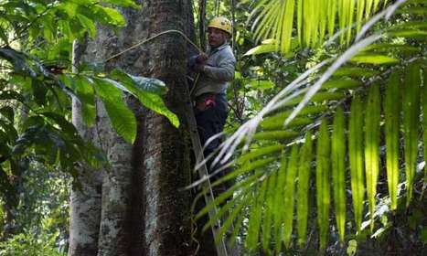 Cause for hope: Secondary tropical forests put on weight fast | GarryRogers Biosphere News | Scoop.it