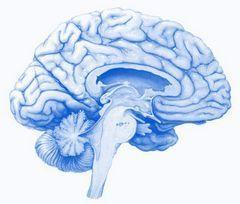 Un stress soudain met le cerveau humain en mode survie | Fonctionnement du cerveau & états de conscience avancés | Scoop.it