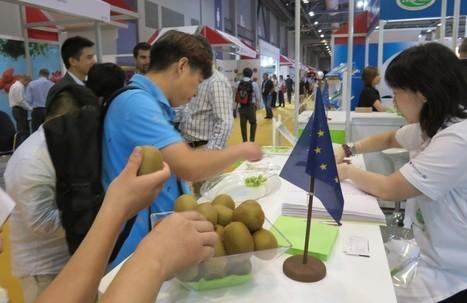 FreshFruitPortal.com | Greek kiwifruit growers avoid gold varieties to stay Psa-free | Fruits & légumes à l'international | Scoop.it
