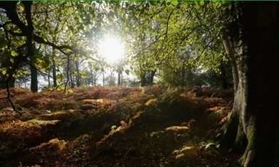 Labour promises to protect public forests   Forestry   Scoop.it