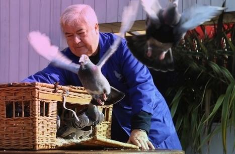 Une patrouille de pigeons twitte la pollution à Londres | Culture et société | Scoop.it