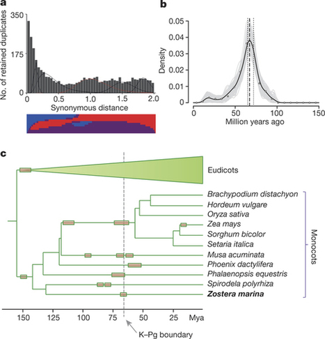 The genome of the seagrass Zostera marina reveals angiosperm adaptation to the sea : Nature : Nature Publishing Group | Erba Volant - Applied Plant Science | Scoop.it