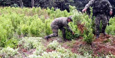 Los narcos están tecnificando cultivos de coca | Mundo Criminal | Scoop.it