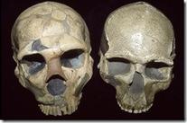 El Cerebro Neanderthal Pudo Jugarles En Contra.   Pablo Della ...   La Evolución Humana   Scoop.it
