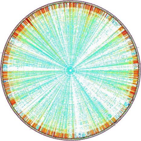 The genome's 3D structure shapes how genes are expressed | Biosciencia News | Scoop.it