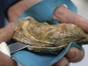 Oysters are more complex than we think | Southern Hemisphere | Scoop.it