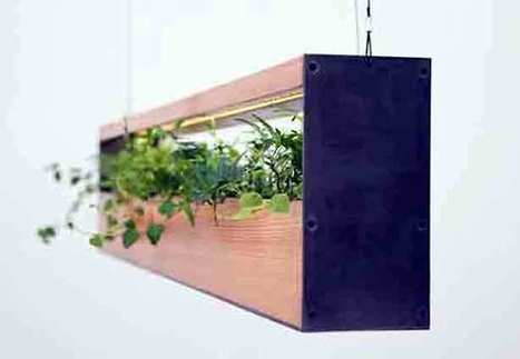 Hanging Garden Lamps Green Up Interiors | Urban Gardens | Annie Haven | Haven Brand | Scoop.it