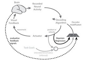 Advances in Neuroprosthetic Learning and Control | Papers | Scoop.it