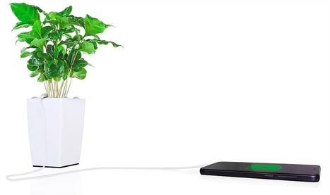 Voici Bioo Lite, la plante verte qui recharge votre smartphone ! | Economies du Futur ! | Scoop.it