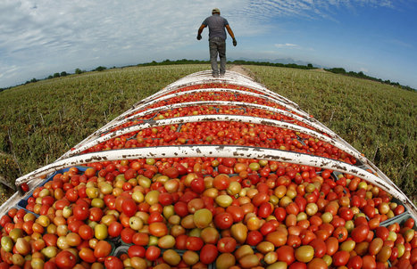 LABOR RIGHTS: Hardship on Mexico's farms, a bounty for U.S. tables | > Human Rights | Scoop.it