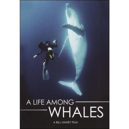 walmart coupons 10% off on A Life Among Whales (Widescreen) | shopping mall | Scoop.it