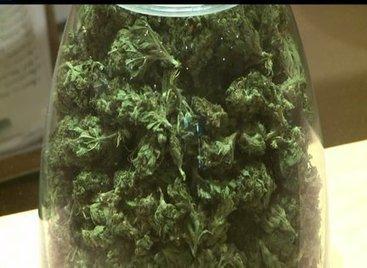 Looser Marijuana Laws May Reduce Painkiller Overdoses - Q13 FOX | Healing Chronic Pain & Disease | Scoop.it