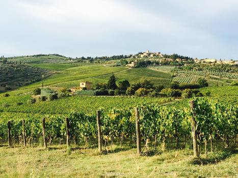 Beauty and the Brunello: A #Wine Love Story in #Tuscany   Vitabella Wine Daily Gossip   Scoop.it