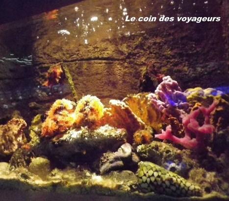 Visite en famille : le spectaculaire Aquarium de Sydney | Voyager avec ses enfants : l'Australie en famille | Scoop.it