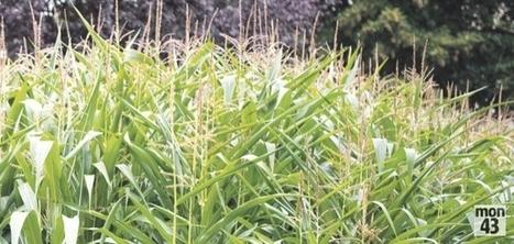 La Haute-Loire en alerte suite à la découverte d'un insecte | EntomoNews | Scoop.it