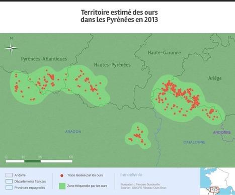 L'ours va-t-il pouvoir sauver sa peau dans les Pyrénées ? | Ecology view | Scoop.it