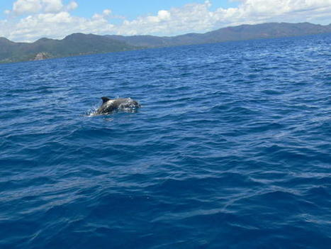 Mammifères et oiseaux marins de N-Calédonie et de Wallis et Futuna vont être recensés | Outre-Mer | Scoop.it