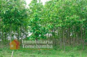 Vendo plantaciones de madera teca/colimes de Balzay-Guayas | El Negocio De La Reforestacion. | Scoop.it
