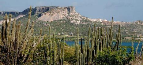 Natuur van Curacao - Flora en Fauna   Het Caraïbisch gebied, vergrijzing en wat extraatjes   Scoop.it