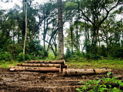 A sustainability journey through the Amazon rainforest | Food & Sustainability | Scoop.it