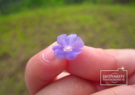 Little Hands for Tiny Flower - Frustrated Photographer   Photography   Scoop.it