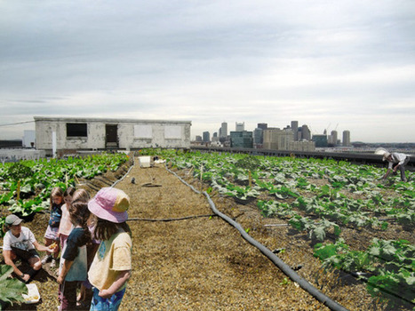 Urbanites combat climate change with rooftop farms — MSNBC | Global Climate | Scoop.it