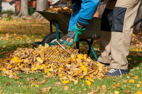 Rake Leaves Free from Back Pain with Tips from Urgent Care Facilities | US Healthworks Union City | Scoop.it