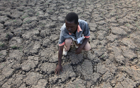 Drought-stricken Zimbabwe declares state of disaster | Upsetment | Scoop.it