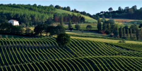 Moncaro: Doctor Wine suggests you an affordable Le Marche Winery | Wines and People | Scoop.it