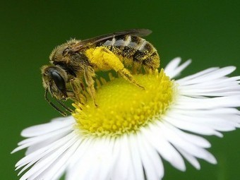 Syngenta seeks exemption from neonicotinoid ban | Sustainability Science | Scoop.it