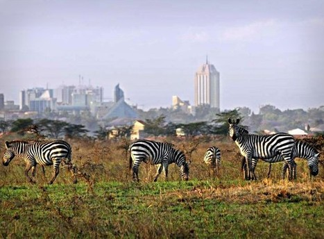 Can Nairobi And Its One-Of-A-Kind National Park Continue To Coexist? | Haak's APHG | Scoop.it