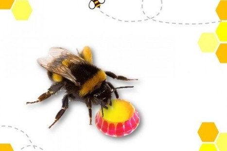Keychain First Aid Kit Might Help Save The Bees | Beekeeping | Scoop.it