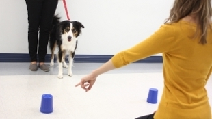 Dogs seem to be more in tune to human communication than any other animal | Gavagai | Scoop.it