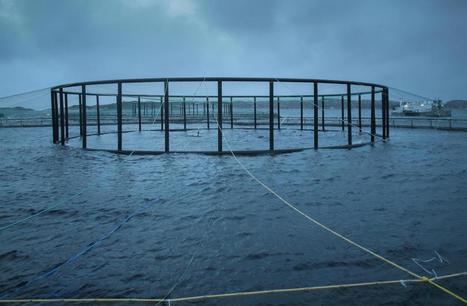 Pesticides : le saumon d'élevage passe entre les mailles du filet | Indignons nous : la dégradation de l'environnement impacte notre santé | Scoop.it