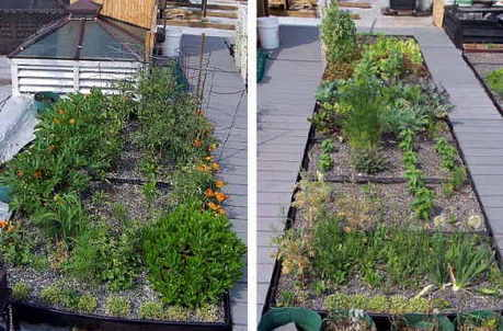 How to Start a Green Roof Garden | Gardening Tips 101 | Scoop.it
