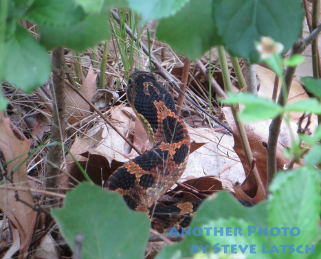 A Snake in the Grass | Travel Musings and Photography | Scoop.it