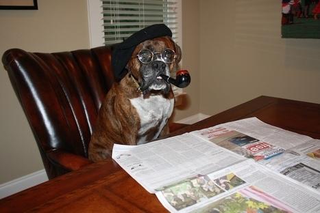 Dog Tricks Training Sarasota, Puppy Training Classes Sarasota, Private Dog Training Sarasota | dog training Sarasota | Scoop.it