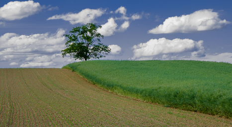 Ces mesures de la « loi Biodiversité » qui vont changer votre quotidien | Apiculture, agriculture et environnement | Scoop.it