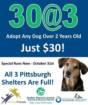 Local shelters unite for 30@3 dog adoption promotion | Pet News | Scoop.it