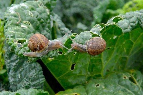 Terr'eau ciel | Chimie verte et agroécologie | Scoop.it