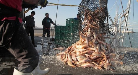 Fish toxins at lowest levels in decades | Global Aquaculture News & Events | Scoop.it