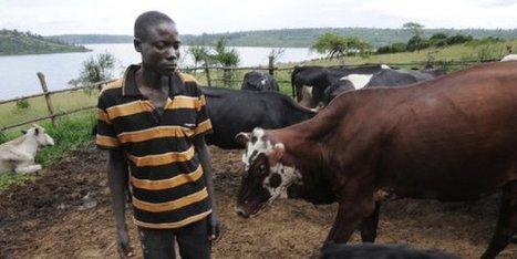 Agro-industrie : l'Afrique vers l'autosuffisance ? - JeuneAfrique.com | Je, tu, il... nous ! | Scoop.it