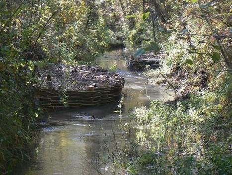 Protéger les adoux du Buëch, refuges des poissons | Zones humides - Ramsar - Océans | Scoop.it