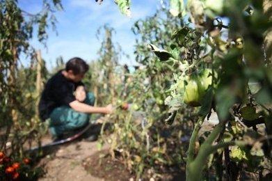 La ville plante des agriculteurs   Agriculture en Dordogne   Scoop.it