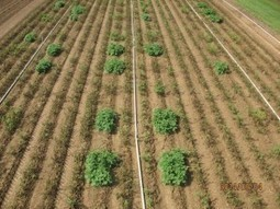 Sustainable potato that resists blight given green light by USDA, but anti-GMO activists remain opposed   Genetic Literacy Project   The science toolbox   Scoop.it