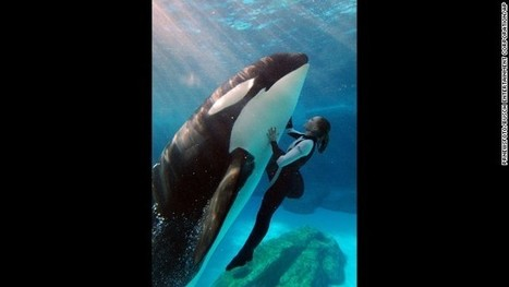A win-win solution for captive orcas and marine theme parks | GT Tech Challenge | Scoop.it