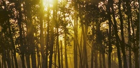 L'étonnant sommeil des arbres | DORMIR…le journal de l'insomnie | Scoop.it