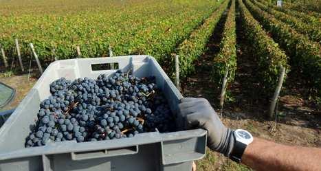 Vin: l'été indien sauve le millésime 2014 | Le vin quotidien | Scoop.it