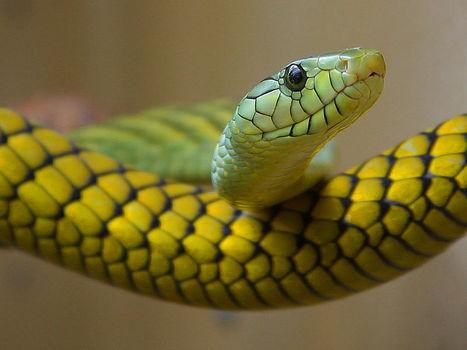 樹上的蛇兒尾巴長 | 孵個小故事 | Scoop.it