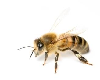 Eclats de mondes disparus (5) / France Inter | EntomoScience | Scoop.it